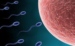 Low sperm count/Oligozoospermia