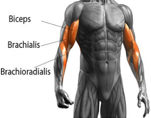 Work on the right muscles
